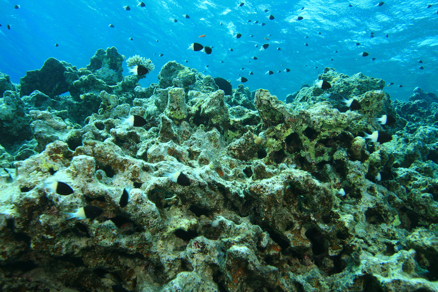 the problem of the coral reefs destruction Coral reefs represent some of the densest and most varied ecosystems on earth over the past 50 years the health of these reefs have been declining using high-resolution satellite imagery, scientists are locating the reefs that are in the most trouble.