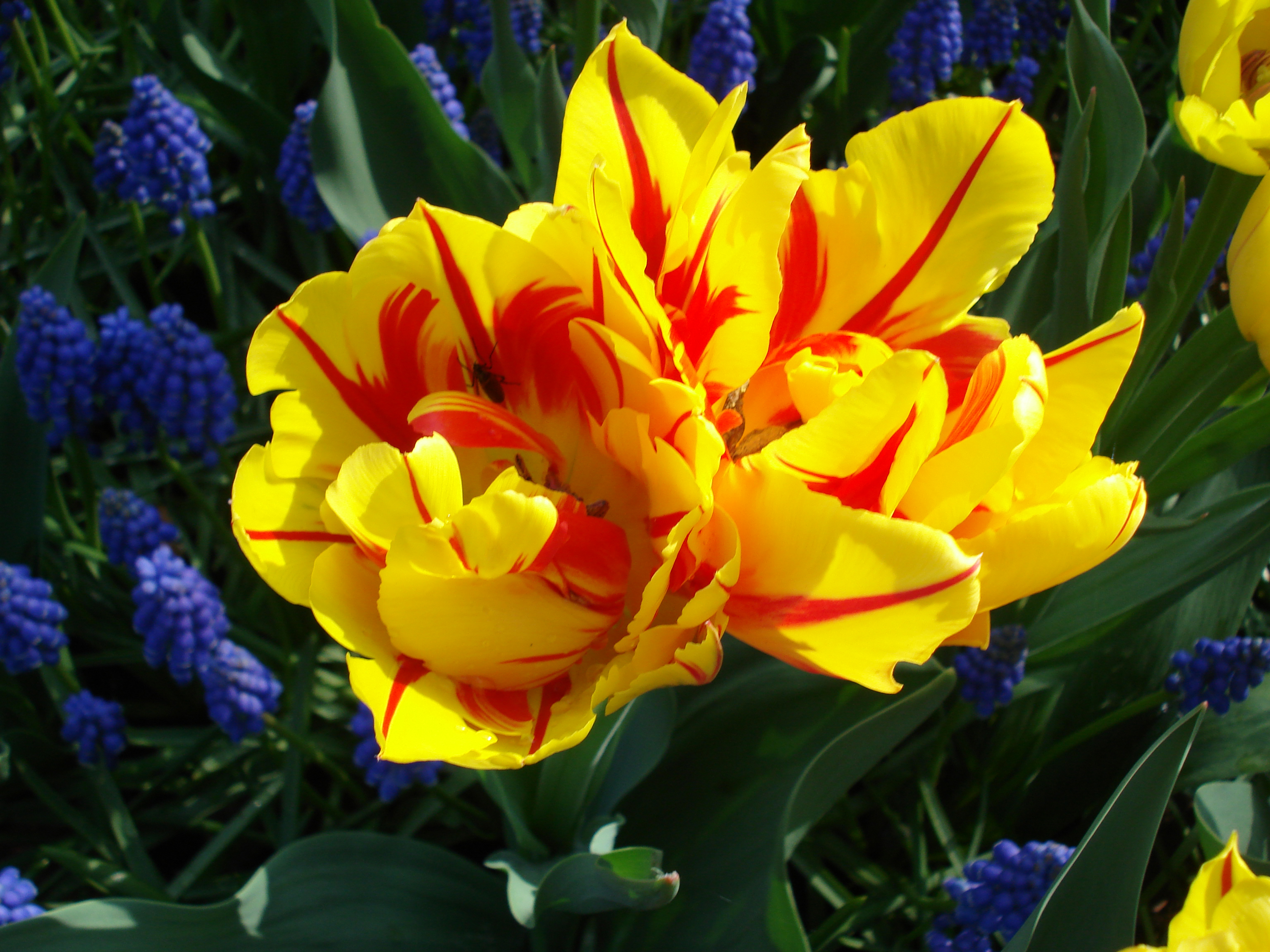 Living On Earth Creating Tulips