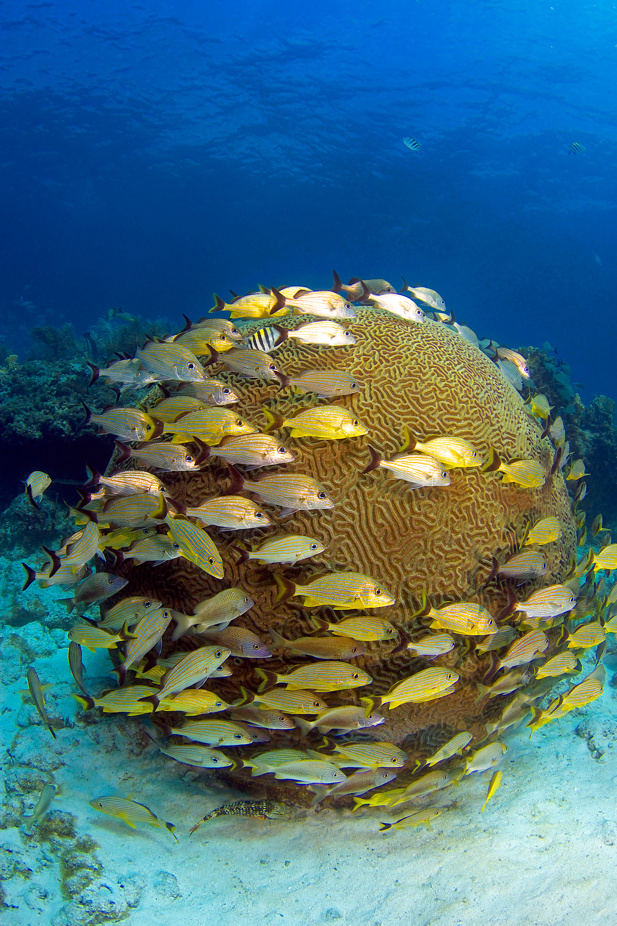 Living on earth climate departure date for Florida tropical fish