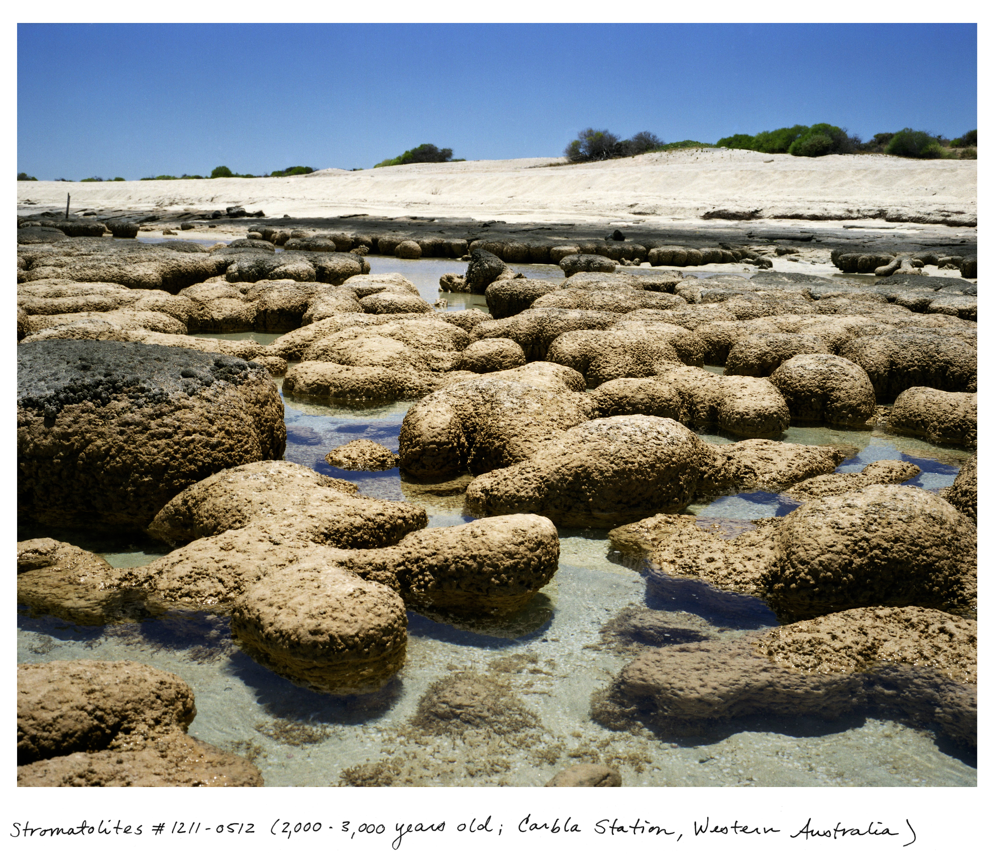 Living On Earth The Oldest Living Things In The World