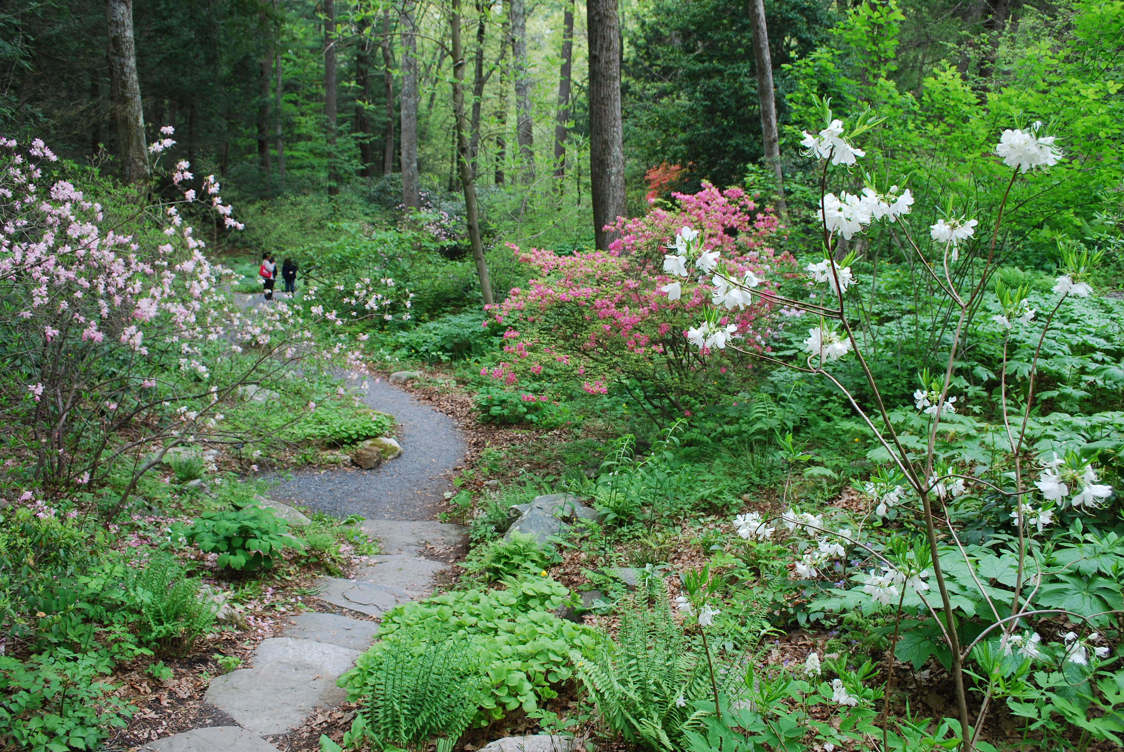 Landscaping Backyard With Woods : The new england wild flower society s garden in woods full